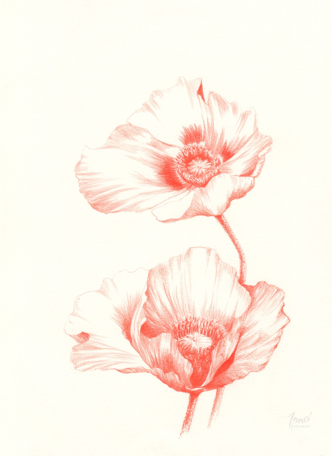 POPPIES | pencil on paper