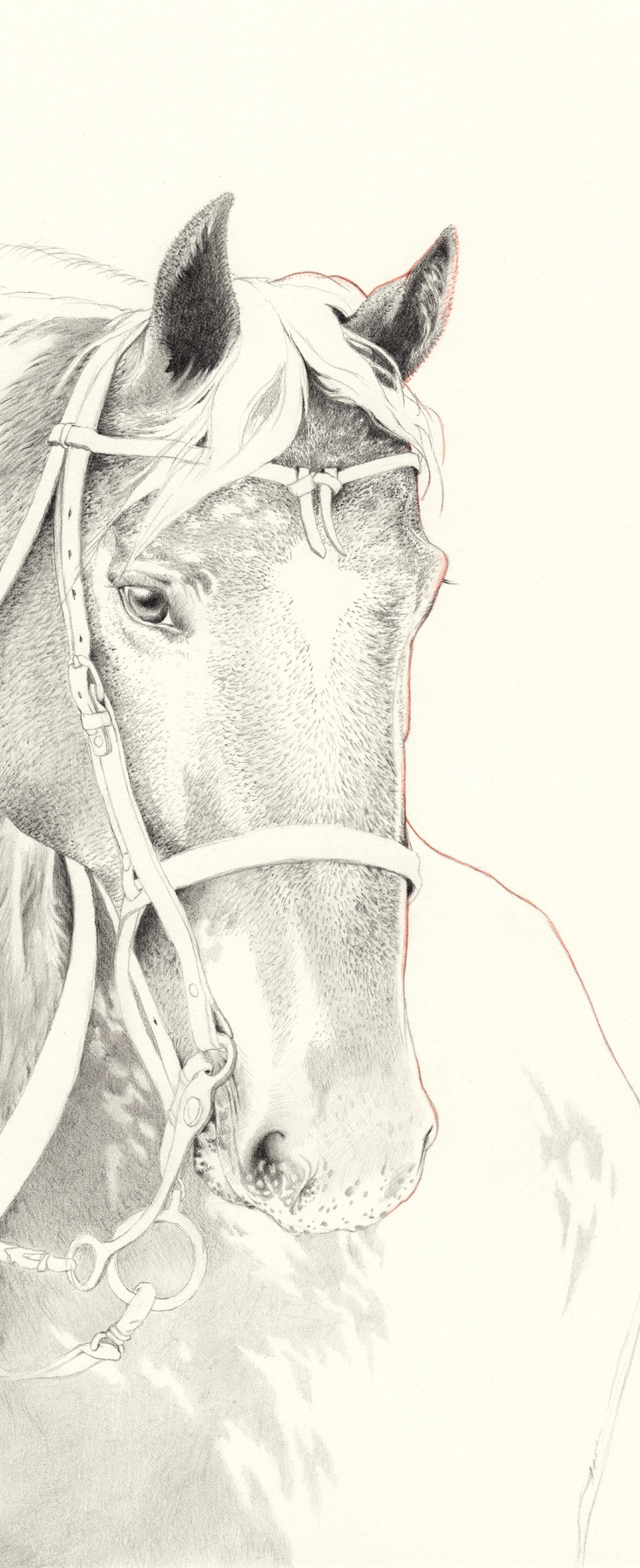 HORSE   pencil on paper