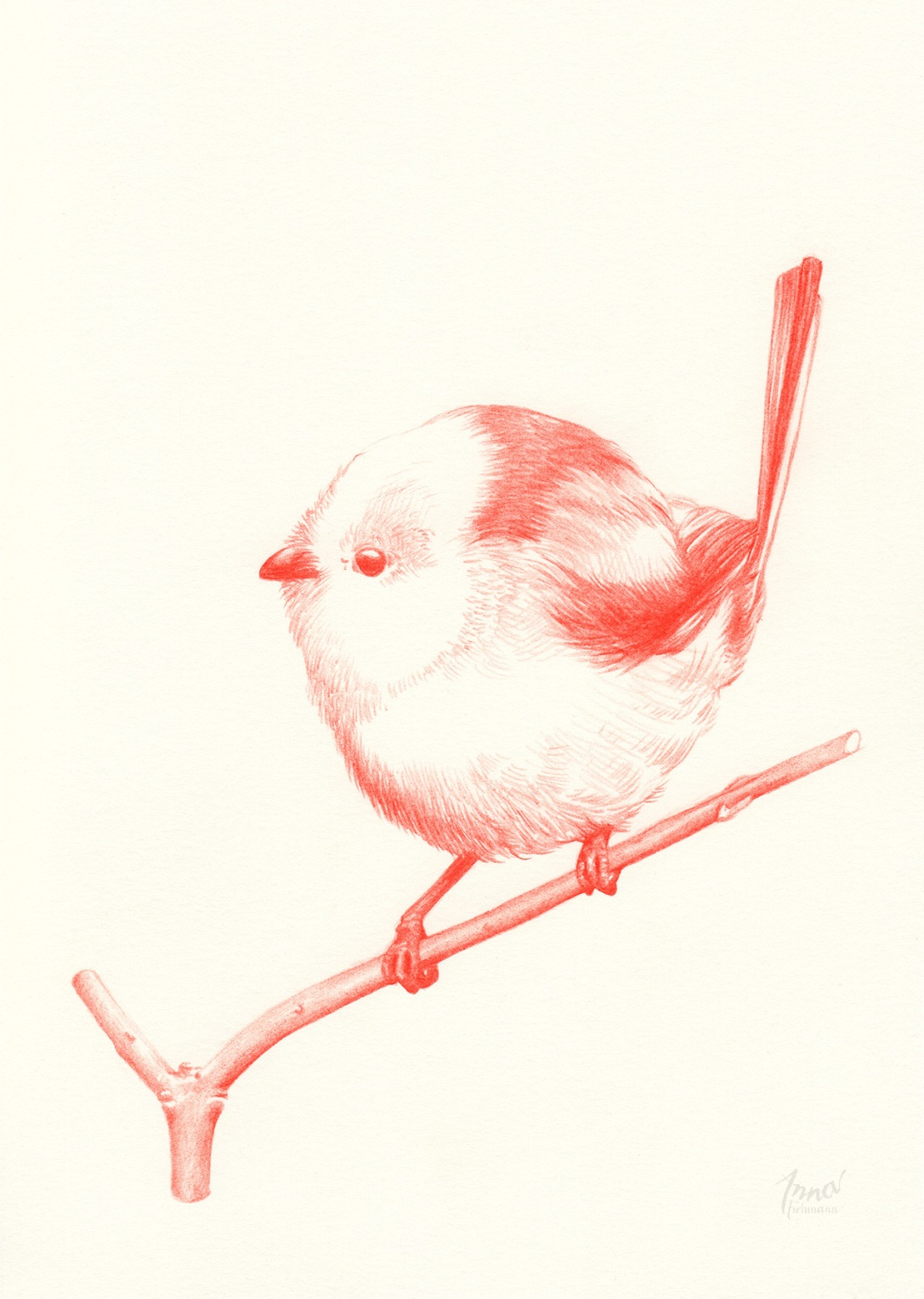 TITMOUSE | pencil on paper