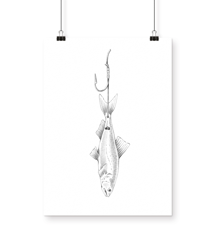 FISCHERS FRITZ Magazine | Fishing illustrations
