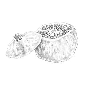 Tipps & Tricks Illustrationen | Granatapfel aufschneiden